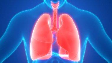 depositphotos_242648328-stock-photo-illustration-human-respiratory-system-lungs.jpg